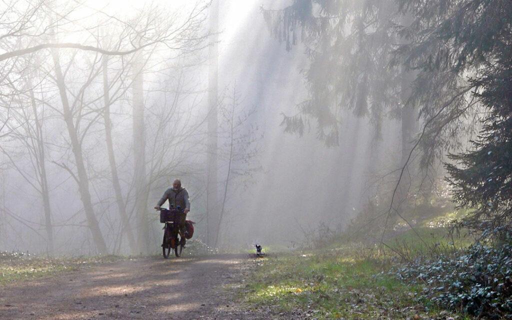 BayerYogi im Nebel