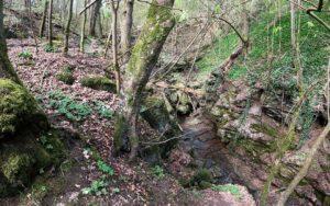 Der Klingelsbachgraben